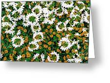 Floral Texture In The Summer Greeting Card