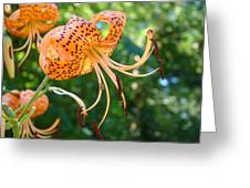 Floral Tiger Lily Flower Art Print Orange Lilies Baslee Troutman Greeting Card
