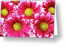 Floral Wallpaper Greeting Card