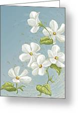 Floral Whorl Greeting Card