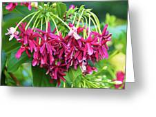 Floral006 Greeting Card