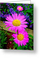 Florescent Daisies Greeting Card
