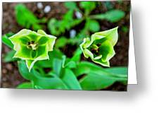 Florescent Green In Stereo Greeting Card