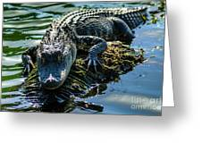 Florida Alligator Greeting Card