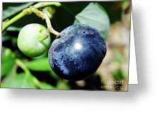 Florida - Blueberry Greeting Card
