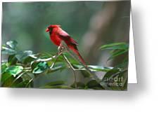 Florida Cardinal Greeting Card