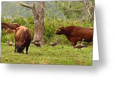 Florida Cracker Cows And Osceola Turkeys #2 Greeting Card