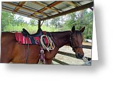Florida Cracker Horse Greeting Card