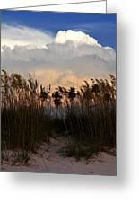 Florida Dunes Greeting Card