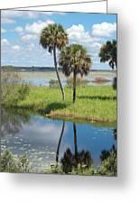 Florida Essence - The Myakka River Greeting Card