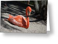Florida Flamingo Greeting Card