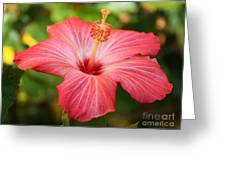 Florida Hibiscus Greeting Card