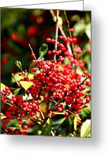 Florida Holly Berry's  Greeting Card