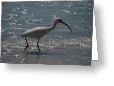 Florida Ibis 2 Greeting Card