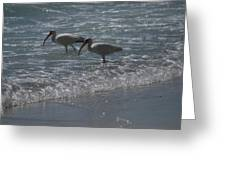 Florida Ibis Greeting Card