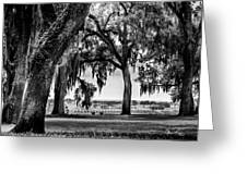 Florida Interior From Bok Gardens Greeting Card