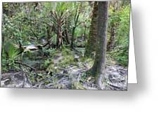 Florida Landscape - Lithia Springs Greeting Card