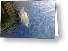 Florida Manatee Greeting Card