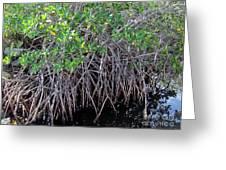 Florida - Mangroves Greeting Card
