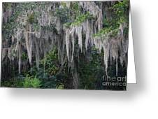 Florida Mossy Tree Greeting Card