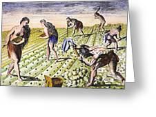 Florida Natives, 1591 Greeting Card