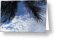Florida Palm Fronds Blowing In The Breeze Greeting Card