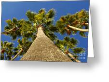 Florida Palms Greeting Card