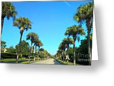 Florida Palms Greeting Card