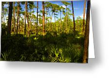 Florida Pine Forest Greeting Card