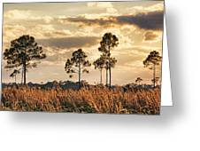Florida Pine Landscape By H H Photography Of Florida Greeting Card
