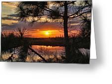 Florida Pine Sunset Greeting Card