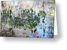 Florida Pond Greeting Card