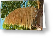 Florida Queen Palm Flower  Greeting Card