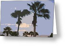 Florida Queen Palm Trees   Greeting Card