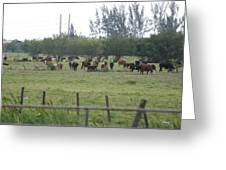 Florida Ranch Greeting Card