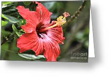 Florida Red Greeting Card