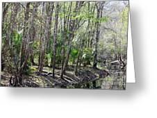 Florida Riverbank  Greeting Card