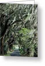 Florida Road Greeting Card