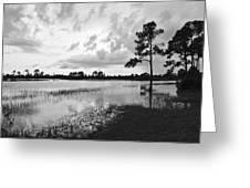 Florida Scene Greeting Card by Steven Scott