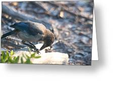 Florida Scrub Jay Breakfast Time Greeting Card