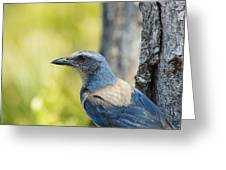 Florida Scrub Jay On Tree Trunk 2 Greeting Card