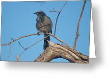 Florida Scrub Jay Watching The Lay Of The Scrub Greeting Card