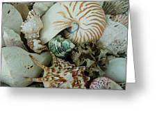 Florida Sea Shells Greeting Card
