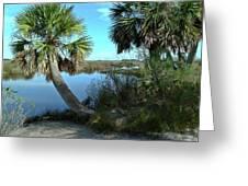 Florida Shade Trees Greeting Card