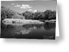 Florida Shoreline Greeting Card