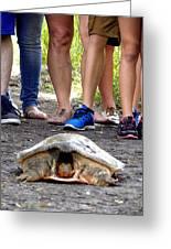 Florida Softshell Turtle 003 Greeting Card