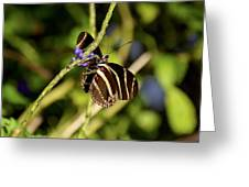 Florida State Butterfly Greeting Card