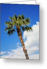 Florida State Tree Greeting Card