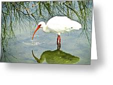 Florida Stork Greeting Card
