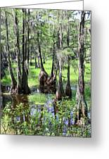 Florida Swamp Greeting Card